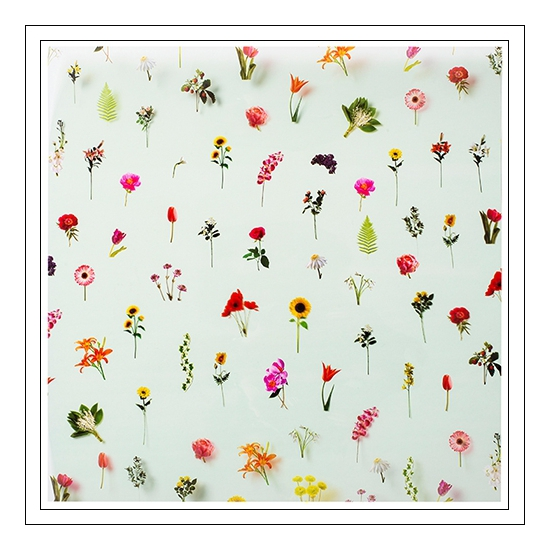 Studio Calico Specialty Paper Transparency Sheet Floral Elliot Collection