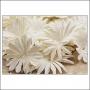 Prima Marketing E-Line Paper Flowers Confetti Mixed White